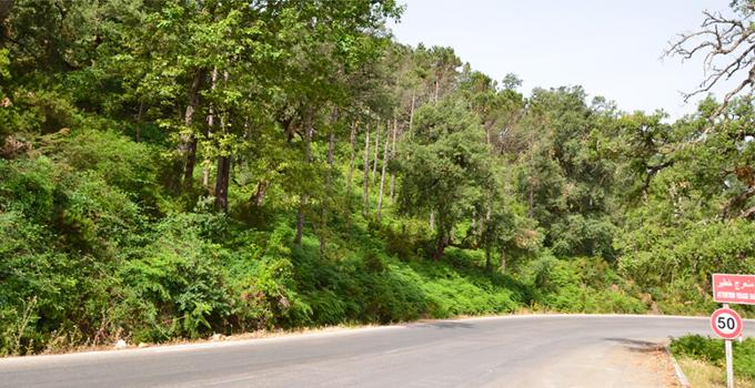 Ain Draham : Mobilisation contre la déforestation de 200 hectares